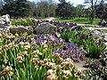 Іриси в ботанічному саду ТНУ імені В. І. Вернадського.jpg