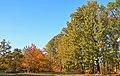 Бобровня восени 02.jpg
