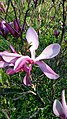 БотаническийСадCH28.jpg