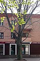 Бук червоний на Театральній вулиці в Хмельницькому P1210138.JPG