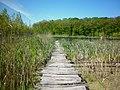 Мост к Черному озеру (Черный лес).jpg