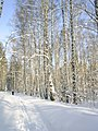 Недалеко от Алексеевского - panoramio (1).jpg