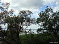 Озеро Нарочь - panoramio.jpg