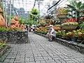 Парк Нонг Нуч - panoramio.jpg