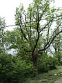 Парк шума Гази Баба во мај (142).JPG
