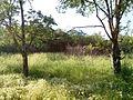 """Парк шума """"Гази Баба"""" 16.jpg"""