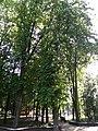 Парк імені Шевченко у місті Хмельницькому, 2.jpg