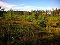 Пустир на місці зрубаного лісу - panoramio.jpg