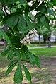 Сад Аквариум в Москве. Фото 18.jpg