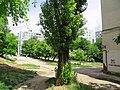 Солнечный. 4 июня 2013г. - panoramio (27).jpg