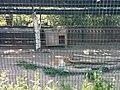 Тварини в зоопарку.jpg