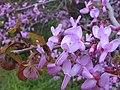 Цветущее дерево - panoramio.jpg