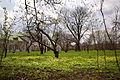 Ясная поляна 2015.JPG
