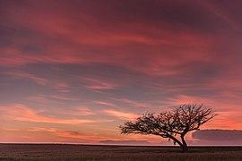 העץ הבודד בתל שירוחן.jpg