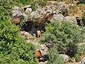 תקריב על המערה במעיין עין קדם בפארק כרמל.jpg