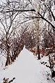 زمستان 92 مراغه - panoramio.jpg