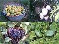 محاصيل بلدة الوقبة الصيفية والشتوية.jpg