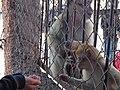 منتزه ثالت مارس 3 الرشيدية، المغرب.JPG