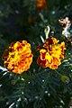 گل - flower 12.jpg