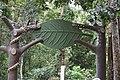 লাউয়াছড়া জাতীয় উদ্যান মেইন গেট.jpg