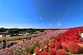 ひたち海浜公園 - panoramio (158).jpg