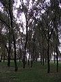 吉林医药学院DSCF0044 - panoramio.jpg
