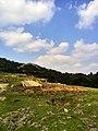 新丰司茅坪林场20150412 - panoramio (128).jpg
