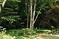 東高根森林公園 - panoramio (41).jpg