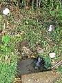 生活湧き水 - panoramio.jpg