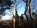 稲沢ハイキングコース5 - panoramio.jpg
