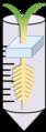 缺磷試驗裝置.png
