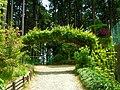 高天山草園にて モッコウバラ(木香薔薇)のアーチ Banksia rose 2012.5.14 - panoramio.jpg