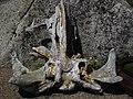 鲸鱼骨骼 - panoramio.jpg