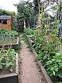 -2020-07-01 Vegetable garden with raised beds, Trimingham, Norfolk (1).JPG