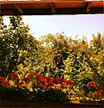 -vienna -garden -flowers -wood -green -grass -pool -summer -plants -sky (8864403767).jpg