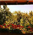 -vienna -garden -flowers -wood -green -grass -pool -summer -plants -sky (8864403767).jpg