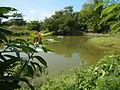 07920jfPampanga River banks Candelaria Welcome Calumpit Bulacan Roadsfvf 23.JPG