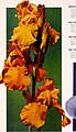 1965 Cooley's Gardens (1965) (16048787354).jpg