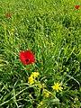 1 - תמונה מבית העלמין הקראי בתקופת האביב בו פורחים מגוון פרחים.jpg