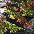 1 Chome Zaimokuza, Kamakura-shi, Kanagawa-ken 248-0013, Japan - panoramio.jpg