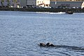 1st MSOB Canine Handler Surf Passage and Zodiac insert training 160209-M-AX605-003.jpg
