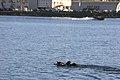 1st MSOB Canine Handler Surf Passage and Zodiac insert training 160209-M-AX605-003.jpg