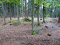 200910070937MEZ Wp 10-10 Holz Süd 1.jpg