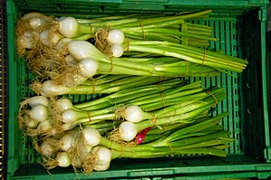Scallion - A close-up view of spring onions (note larger bulb)