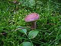 2010-09-07-pilze-by-RalfR-48.jpg