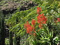 20100222-0306 Gran Canaria (1154).jpg