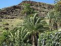20100222-0306 Gran Canaria (1214).jpg