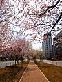 2011年的春天 - panoramio.jpg