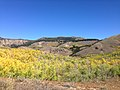 2014-10-04 13 16 58 View of Aspens during autumn leaf coloration from Charleston-Jarbidge Road (Elko County Route 748) in Copper Basin about 7.7 miles north of Charleston, Nevada.jpg