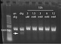 2014 01 15MR Digestion of UDP-Glc DNA by MfeI 3 1 with annotations.jpg